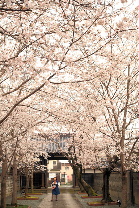桜 無量寿院 八女