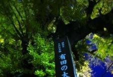 泉山大公孫樹の下で。