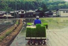 【暮らし】田植えはじまる。オタマジャクシの成長を眺める朝。