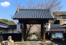 【日々のこと】無量寿院の桜並木