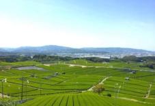 【地域のこと/観光協会】新茶の季節。川がつくる肥沃な土壌がうみだす、甘い八女茶とは。/ Yame Rediscovery vol.2