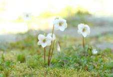 庭にきれいな小さな白い花。