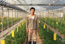 できるか?「砂地栽培トマト展」