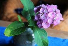 梅雨と紫陽花。