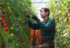 砂地栽培トマト でん一農場HP公開