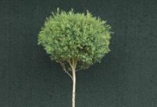 【ワークショップ】出張 両筑植物センター 樹形作りワークショップ