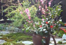 桃と椿と、食べれない菜の花。