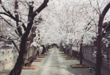 【日々のこと】桜咲く。板から考える展終了。