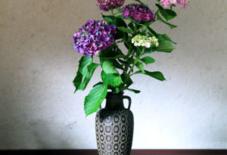 紫陽花と骨董屋で買った花瓶。