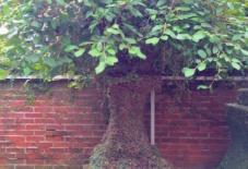 【雑感にょろり】木になった石灯籠 八女の隠れたオアシス