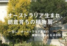 【イベント】オーストラリア生まれ、朝倉育ちの植物展
