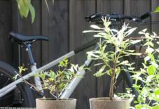 【商品紹介】ティンバーポットとルーツポーチ。そして出張両筑植物センターの植物健康診断会レポート。