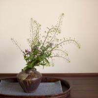 【草花器 五十八】 ナズナ・ホトケノザ